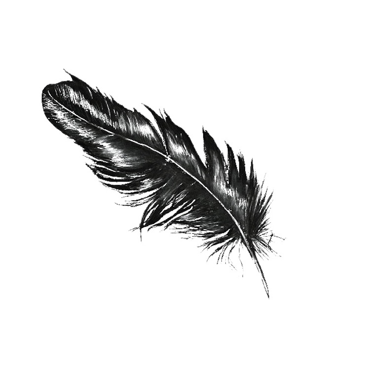 feather_drawing_by_ahsr-d8y9m6z