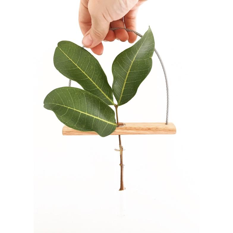 Plant Vases